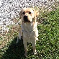 Kindle the Arson Dog