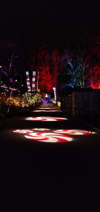 wildlights show at Elmwood Park Zoo